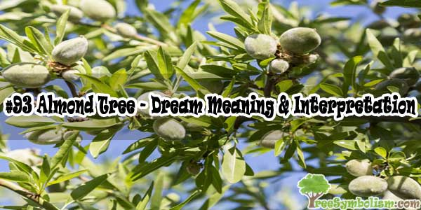 #93 Almond Tree - Dream Meaning & Interpretation