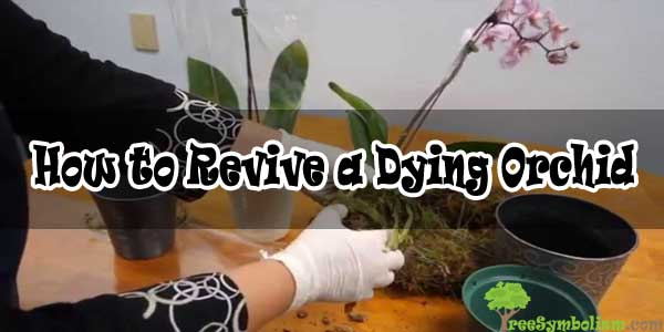 How to Revive a Dying Orchid