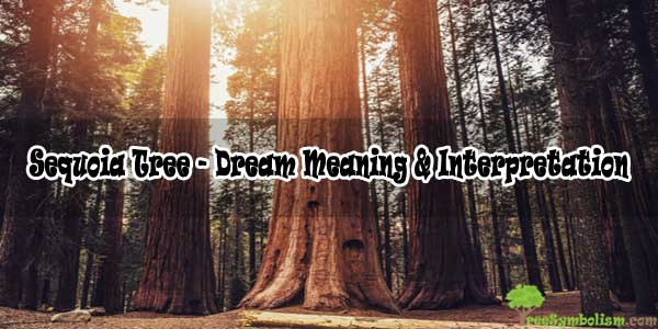 Sequoia Tree - Dream Meaning & Interpretation