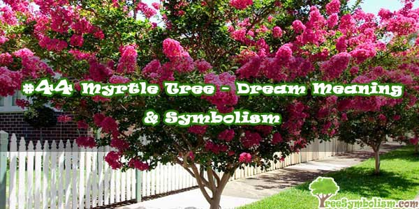 #44 Myrtle Tree - Dream Meaning & Symbolism