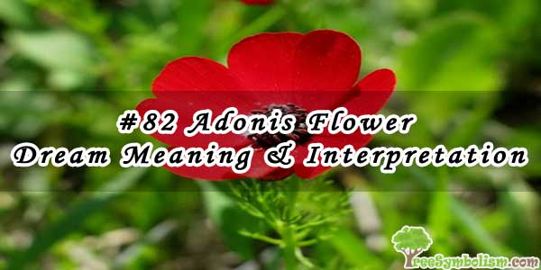 #82 Adonis Flower - Dream Meaning & Interpretation