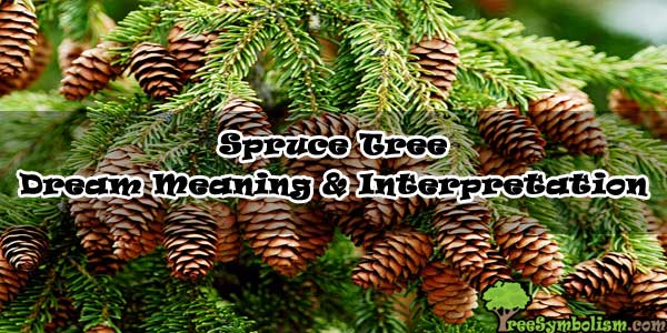 Spruce Tree - Dream Meaning & Interpretation