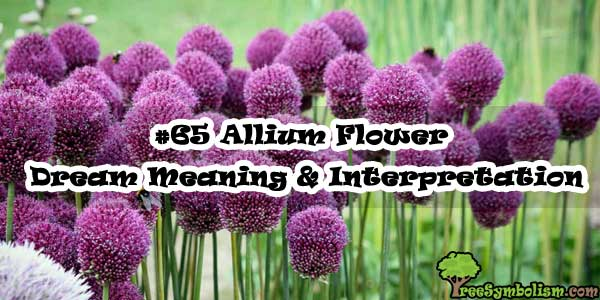 #65 Allium Flower - Dream Meaning & Interpretation