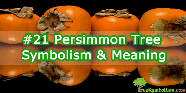 #21 Persimmon Tree - Symbolism & Meaning