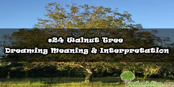 #24 Walnut Tree - Dreaming Meaning & Interpretation