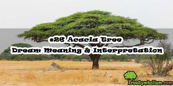 #26 Acacia Tree - Dream Meaning & Interpretation