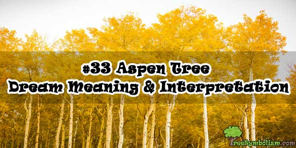 #33 Aspen Tree - Dream Meaning & Interpretation