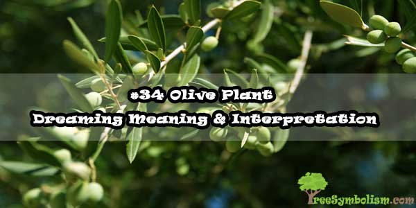 #34 Olive Plant - Dreaming Meaning & Interpretation