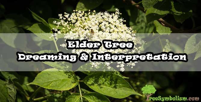 Elder Tree - Dreaming & Interpretation