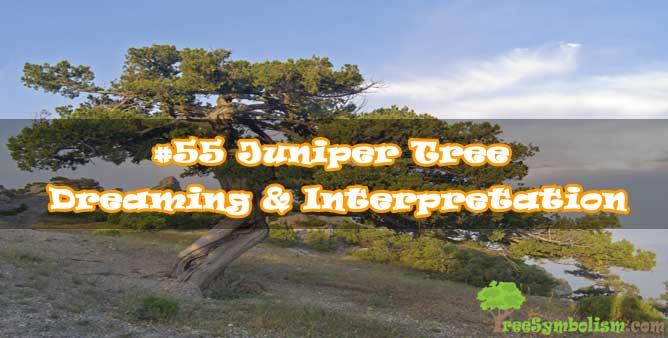 #55 Juniper Tree - Dreaming & Interpretation