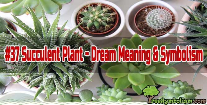 #37 Succulent Plant - Dream Meaning & Symbolism