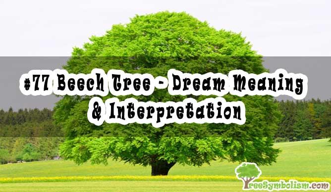 #77 Beech Tree - Dream Meaning & Interpretation