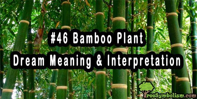 #46 Bamboo Plant - Dream Meaning & Interpretation
