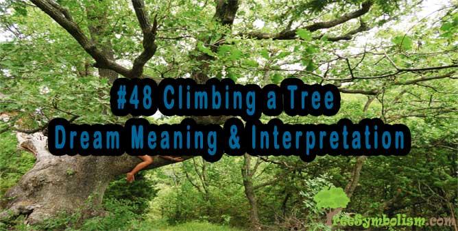 #48 Climbing a Tree - Dream Meaning & Interpretation