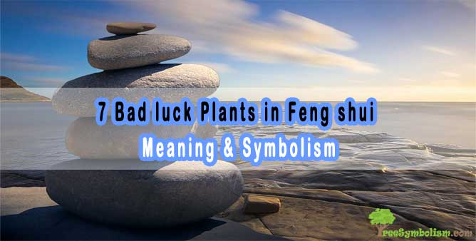 7 Bad luck Plants in Feng shui - Meaning & Symbolism